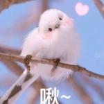莘川-努力画画0v0